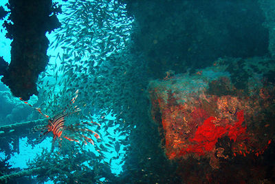 wreck diving, Red Sea