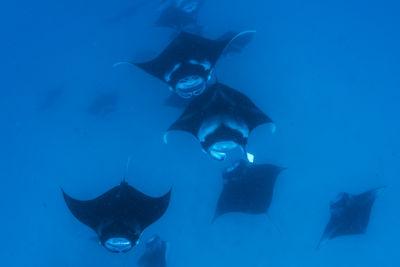 Group of Manta