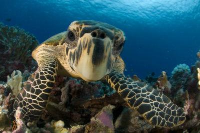 Turtle in Seychelles