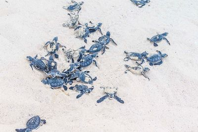 Turtles in the Seychelles