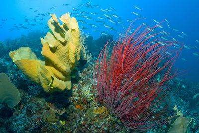 Misool underwater life