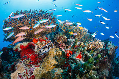 coral reef Maldives