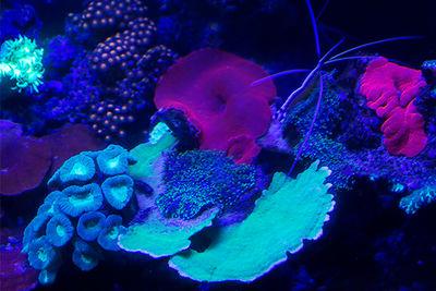 Fluoro Diving