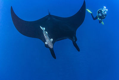 socorro diving