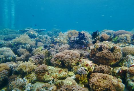 Diving in Alor, Indonesia