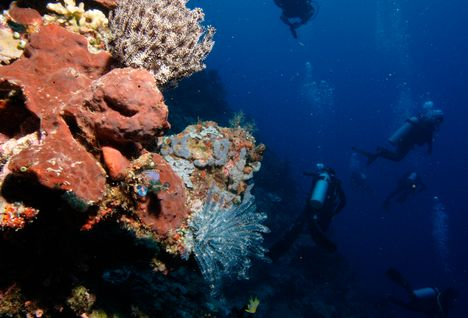 Divers with Coral Wall