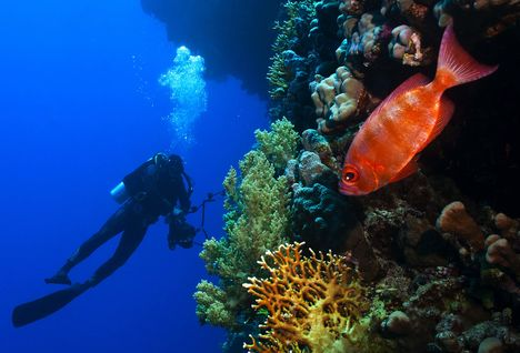 Diver with Coral