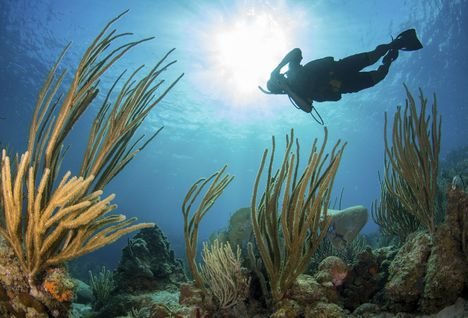 Scuba Diver in British Virgin Islands