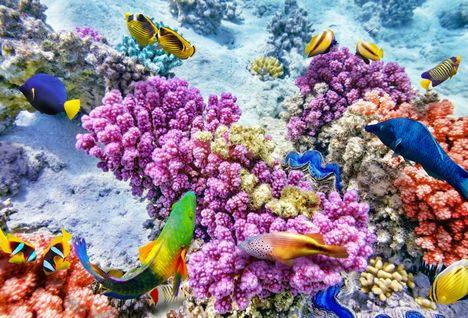 Underwater World with Coral and Tropical Fish