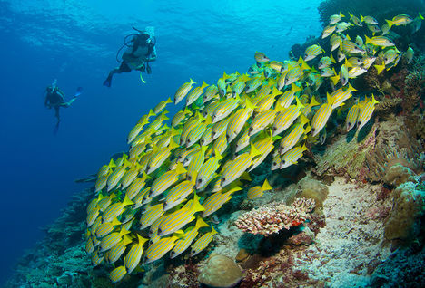 scuba diving in the Laamu Atoll, Maldives