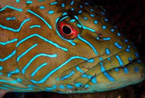diving alor, Indonesia