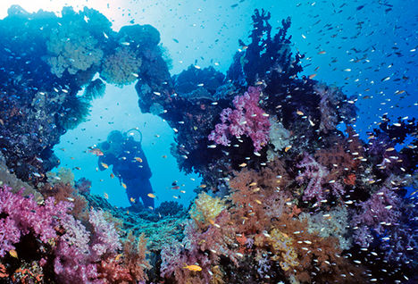 coral reef, Papua New Guinea