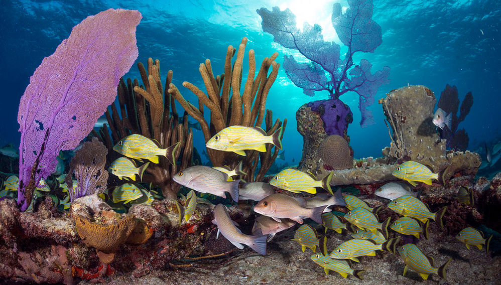 shallow coral reef Caribbean