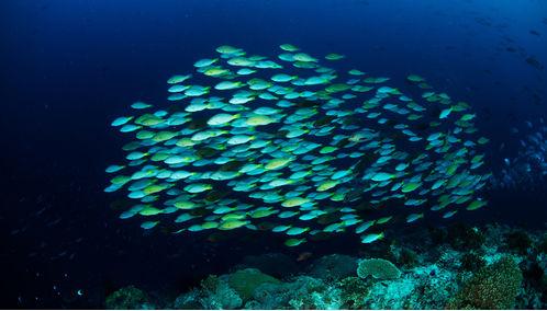 marine life Solomon Islands