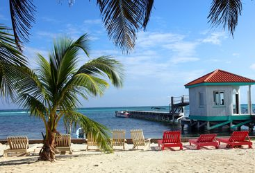 Palm Trees Belize beach