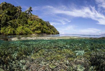 Coral in Raja Ampat