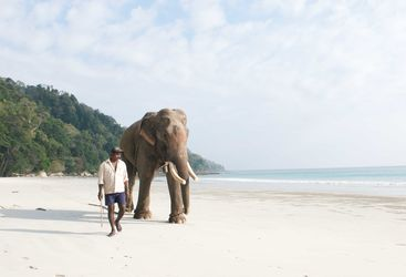 Elephant on beach, Andaman Islands