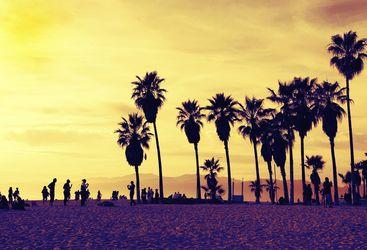 Palm Trees on Miami Beach, USA