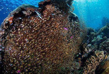 shoal of fish scuba diving
