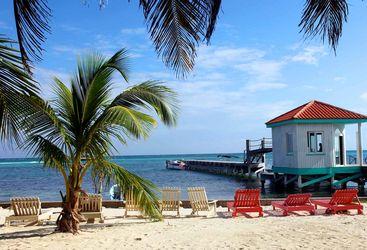 Palm trees, Belize