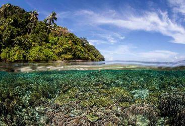 Coral Raja Ampat