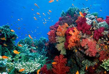 coral fiji