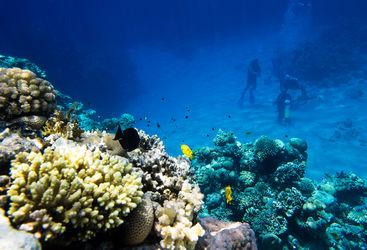 Family diving in Grenada