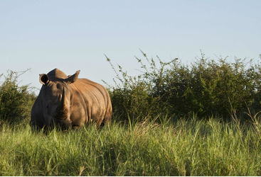 rhino spotted on South Africa family safari holiday