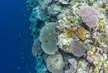 wall diving Solomon Islands