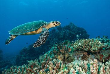 sea turtle seychelles