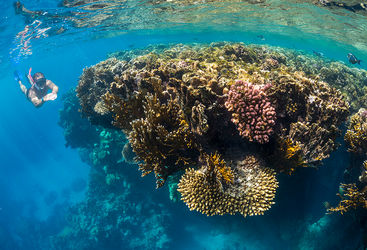 snorkelling Red Sea