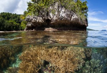 shore diving raja ampat