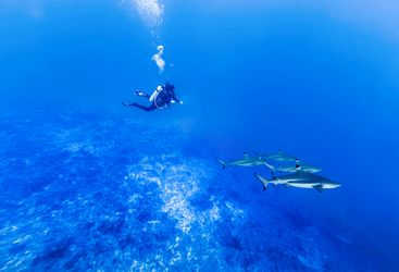 diving in the tiputa pass