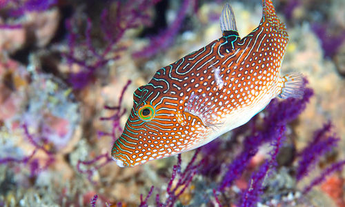 Diving with fish, Oman