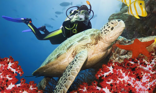 Man diving with turtle and fish