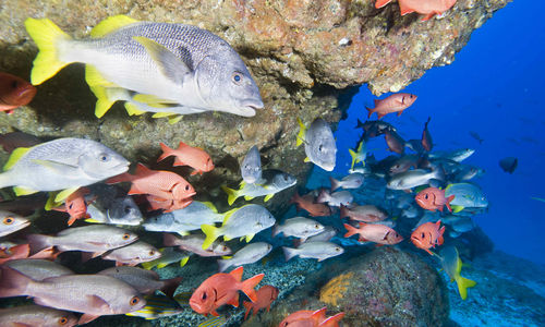 Tropical fish, Costa Rica