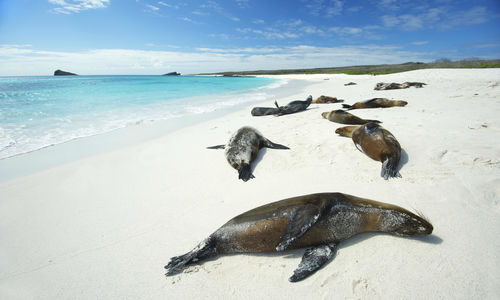 Seals lying on beach