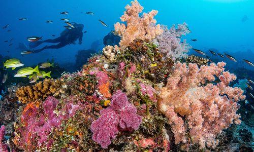 scuba diving astove