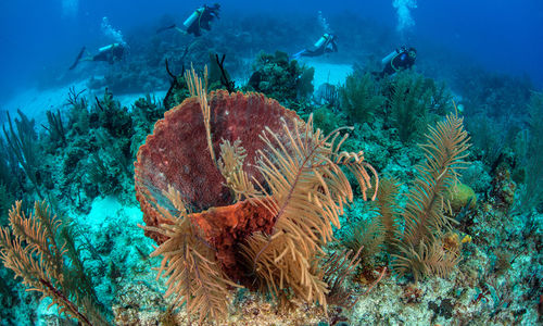 coral reef southern belize