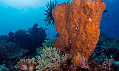 barrel sponge coral