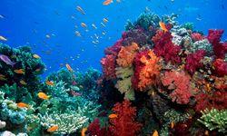 Soft coral, Taveuni