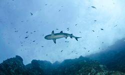 Shark swimming by Socorro Island