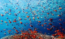 Coral reef, Indonesia