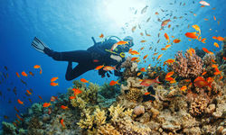 Diving with fish and coral, Caribbean