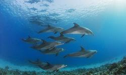 Dolphins in Madagascar
