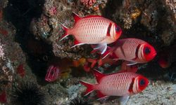Fish in Mozambique