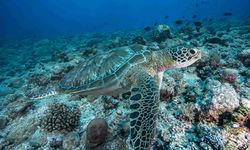 Close up green sea turtle