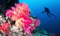Diving with coral, Fiji