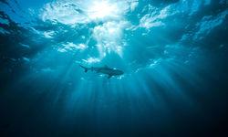 Shark in Micronesia
