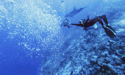 Diving, French Polynesia